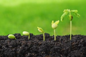 Groei, waarom eigenlijk? Personal & Business Improvement